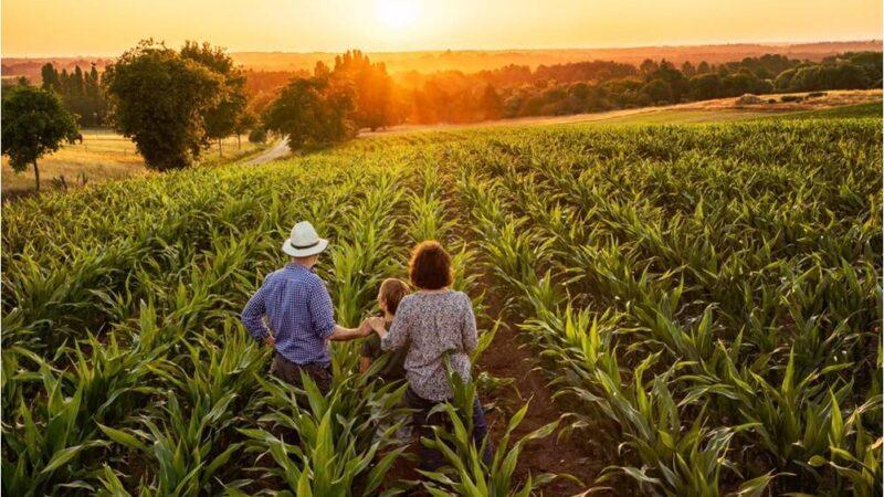 Il Bilancio di esercizio nelle imprese agricole